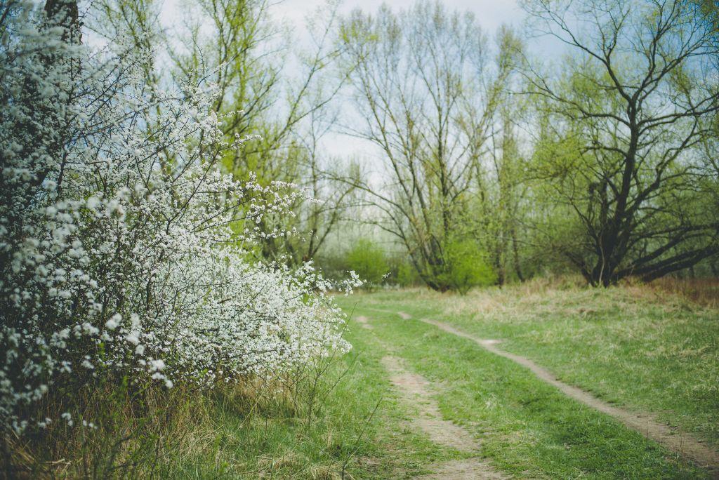 sesja narzeczeńska na polanie krajobraz