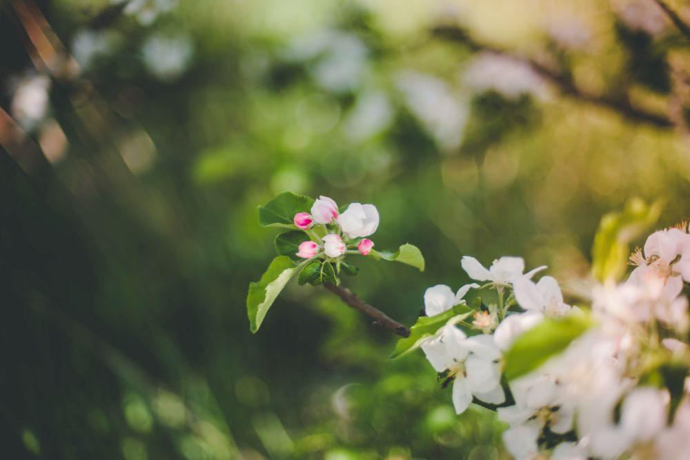 sesja kwiaty
