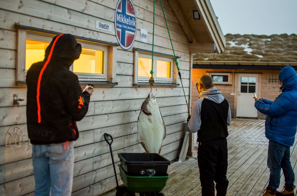 halibut po polow morze norweskie
